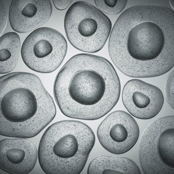 3D illustration of embryonic stem cells under microscope
